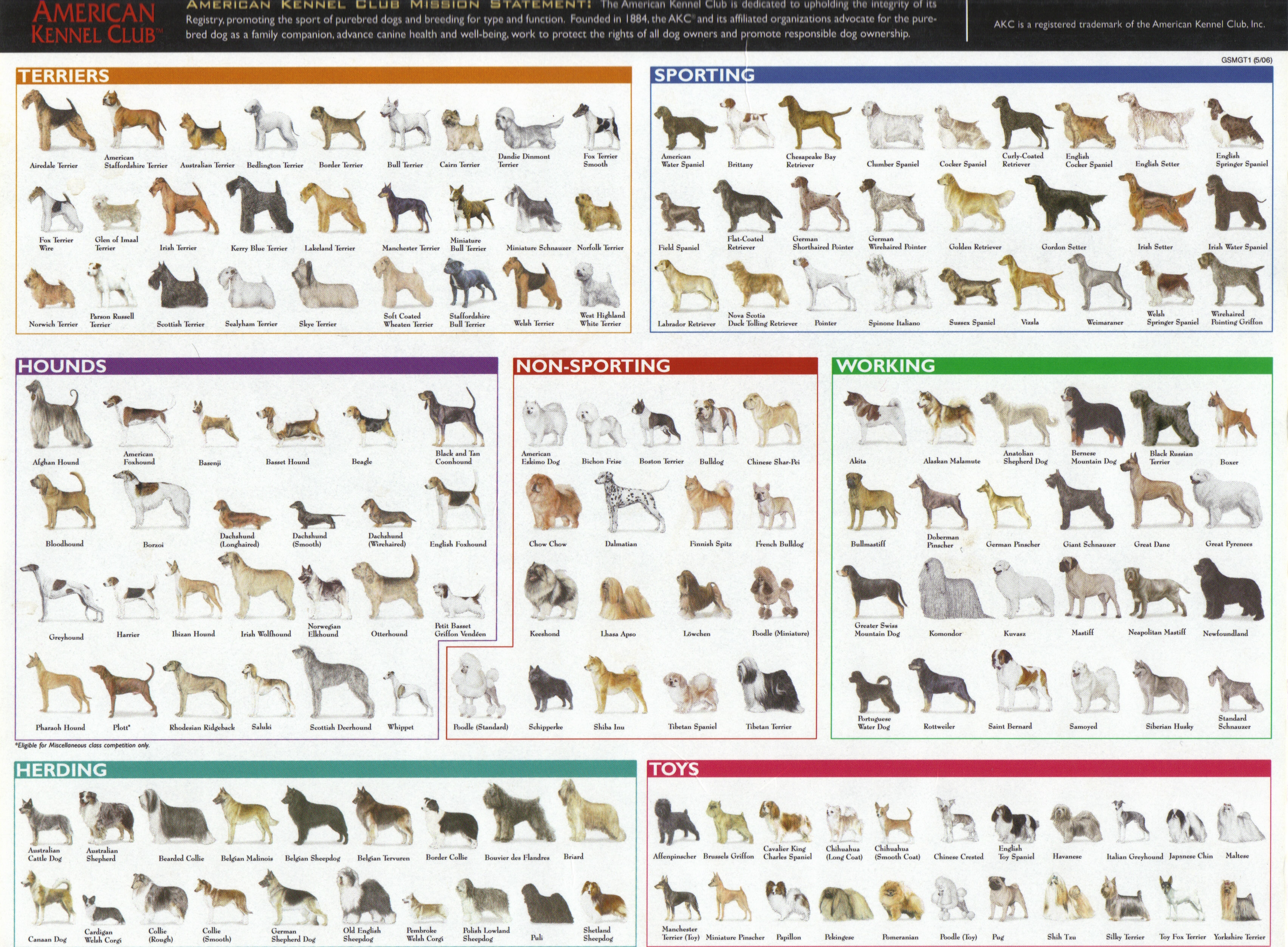 Complete List Of Dog Breeds